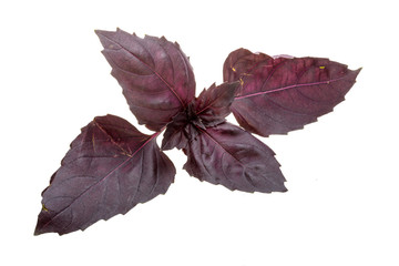 Red basil leaves