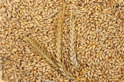 Aluminium Granen Barley grains and ears