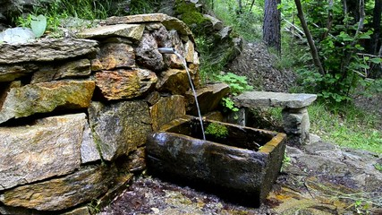 Mineral Water Spring in Forest