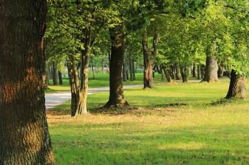 Wunderschöne Herbst Motive im grünen