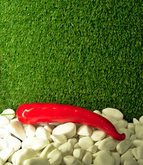 Red chili pepper on white stones and with green grass