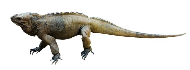 Iguana rhinoceros