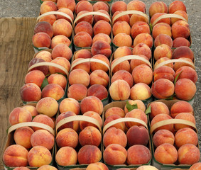 Fresh picked Peaches in Baskets at the Market