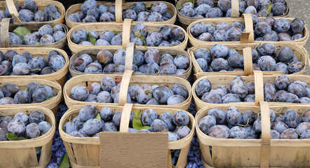 Fresh Plums in Baskets at a Farmer's Market