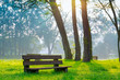 canvas print picture - bench in the natural park of the city in the morning
