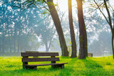 bench in the natural park of the city in the morning poster