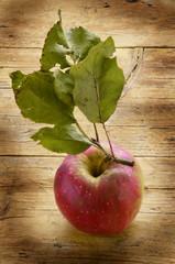 Organic apple Mela biologica Organisk Pomme organique
