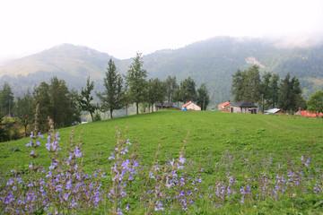 Highlands Of Turkey,Eastern Blacksea Region