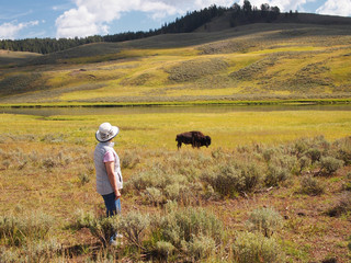 Woman watching a North American Buffalo Grazing in Field with ri