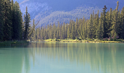 Evergreen Lined Bow River