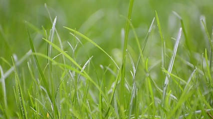 Close up of green grass with focus point