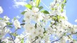 bees collect flower nectar in spring