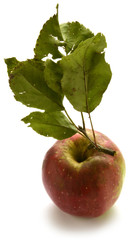 Organic apple Manzana orgánica Bio Apfel органических яблок