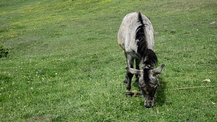 donkey mule on the grass medow