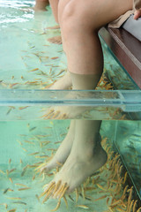 Fish Spa Skin Therapy