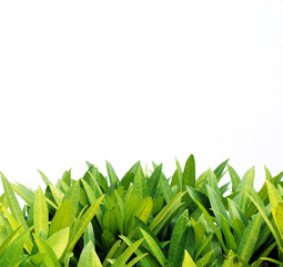 Green leaves and white cement wall, background,template