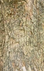 Close up shot of brown tree bark  Texture.