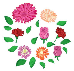 set of vector flowers and leaves