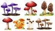 Different types of mushrooms - 70143093
