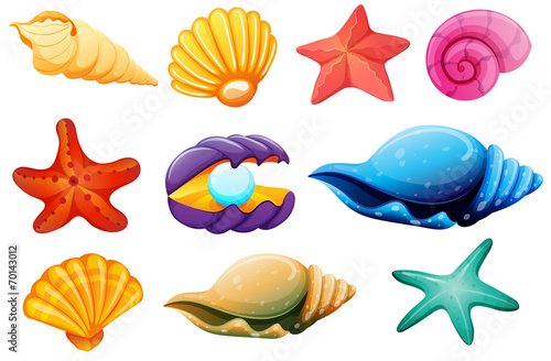 Shell collection - 70143012