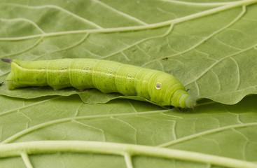 Worm walk on leaf