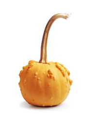 Big yellow pumpkin on a white isolated background