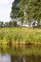 Reeded riverside
