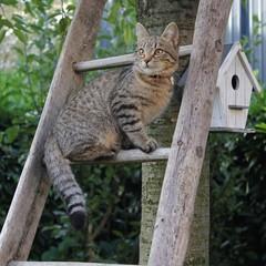 Chaton sur une échelle