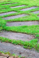 Path Green Grass