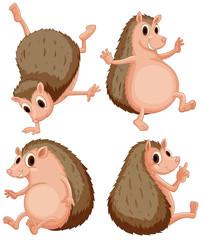 Hedgehog set