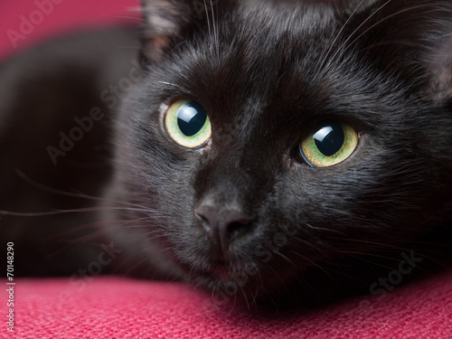 Black cat portrait - 70148290