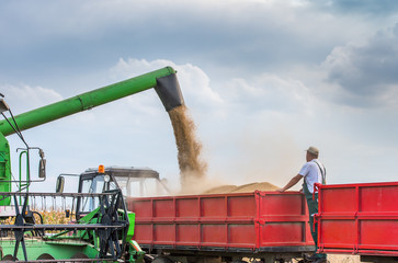 Harvesting of soybean
