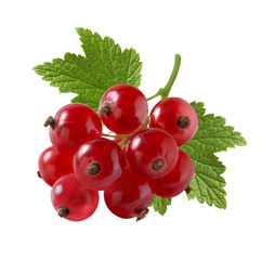 Red currant very small isolated on white background