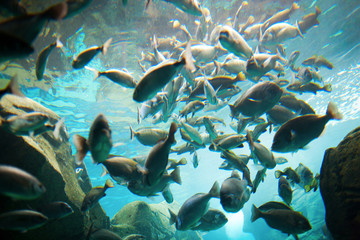 Group of fish i