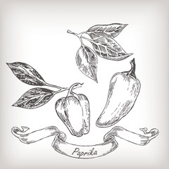 Hand drawn pepper set vector illustration.