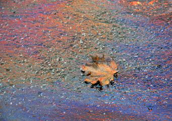 Ahornblatt auf Ölfleck