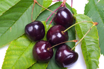 Cherries on cherry leafs