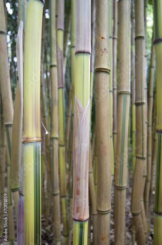 In de dag Bamboo Bambus