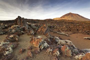 Tenerife XVIII