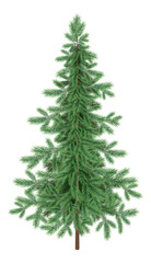 Christmas green spruce fir tree isolated