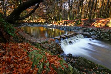 Irish Autumn V
