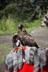 Eagle Filia