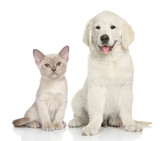 Cat and dog on white background - 70156823