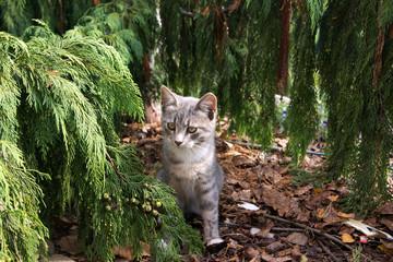Katzenbaby im Tannenwald