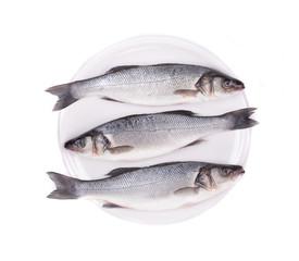 Three fresh seabass fish.