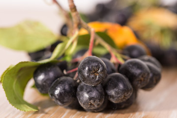 choke-berry (aronia) - branch with berries