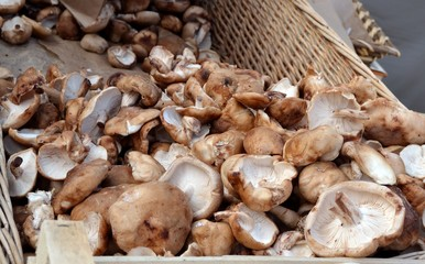 Champignons shiitake en vrac