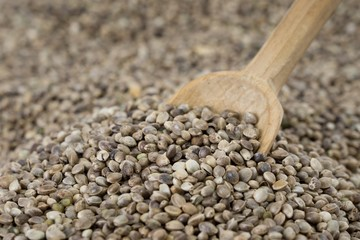 Old wooden spoon placed in a pile of hemp seeds