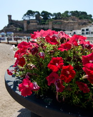 Petunias in a stone flower bed at a beach in front of medieval c