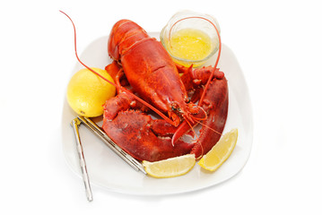 Eating a Fresh Organic Lobster with Lemon and Melted Butter